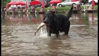 Собака Одержима Рибалка | Kritterбыл Клуб
