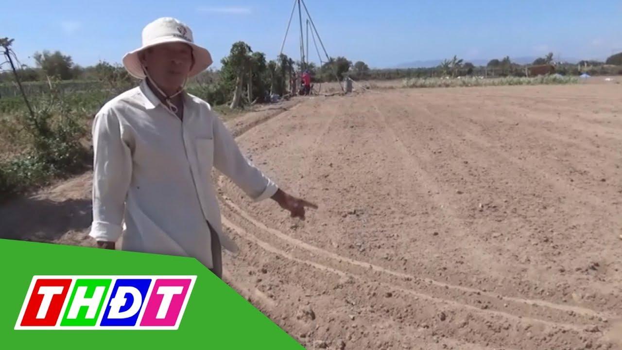 Ninh Thuận: Thiếu nước nhiều diện tích dừng sản xuất   THDT