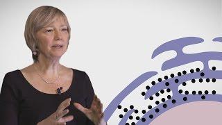 MOOC côté cours : Le récticulum endosplasmique
