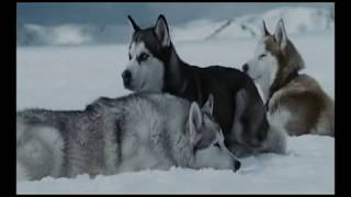 "The more I learn about people the more I love dogs  ""Eight Below"", music- Enigma ""Moment of peace"""