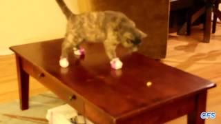 Кошки носят носки  Смешные коты в носках