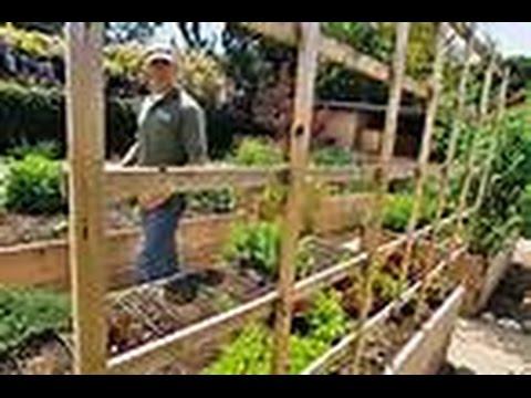 The Best BackYard Farming Channels Ever!