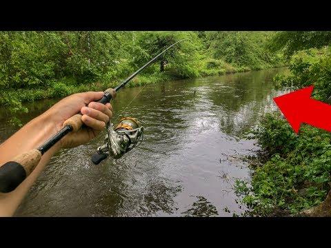 FLOOD Pushes BIG FISH Into Tiny Creek! (Epic)