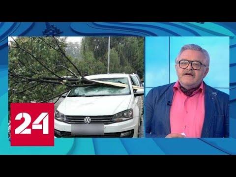 """""""Погода 24"""": шторм обрушился на Калининград - Россия 24"""
