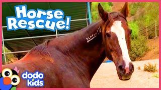 Brave Horse is Determined to Run Again | Animal Videos For Kids | Dodo Kids