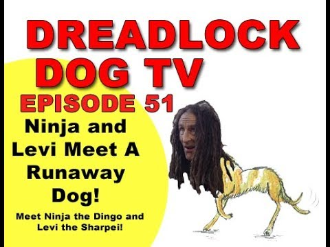 Episode 51   Ninja and Levi Meet A Runaway Dog!