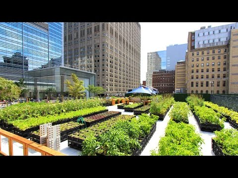 En qué consiste la Agricultura Urbana - TvAgro por Juan Gonzalo Angel