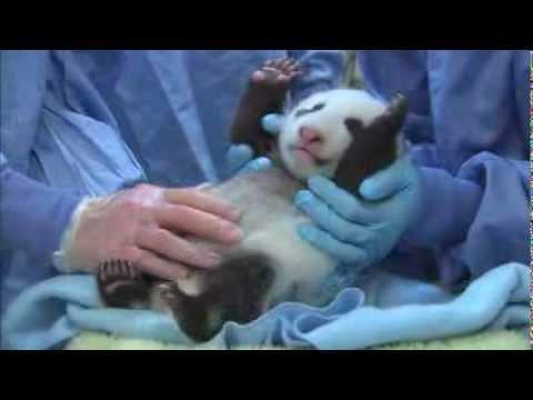 Panda Cub 4th Exam