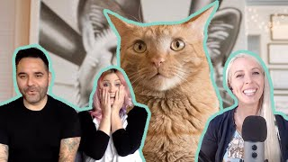 What It's Really Like Running a Cat Rescue - Kitten Lady & Friends