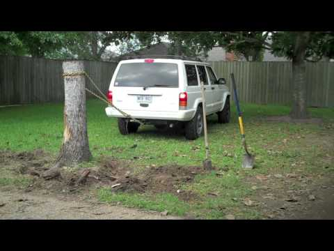 Tree Removal Part II - The Stump