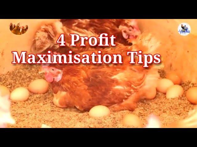 TOP 4 Profit Maximisation Tips