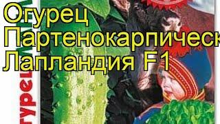 Огурец партенокарпический Лапландия F1. Краткий обзор, описание cucumis sativus Laplandia F1