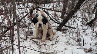 Мужчины нашли собаку, привязанную к дереву