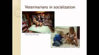 Early Socialization Practices And Adult Dog Behavior – Video Abstract [id 62081]