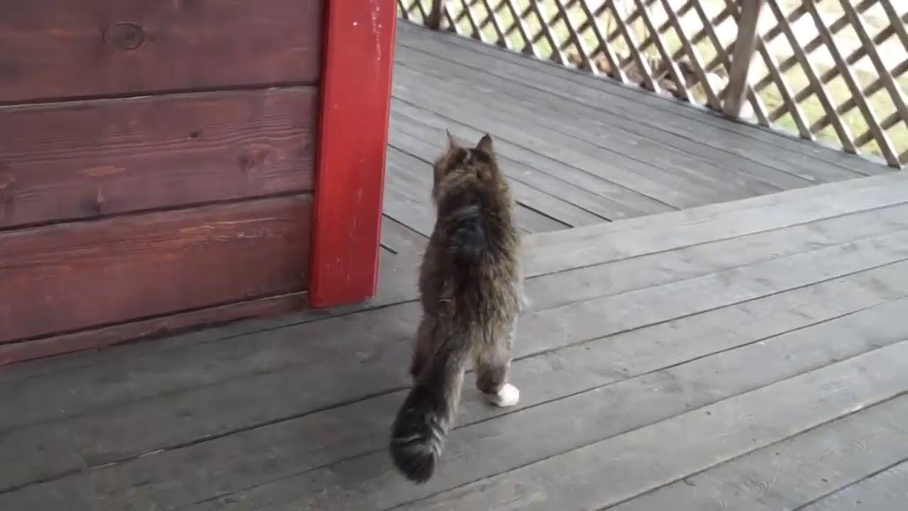 Image result for cats walking inside