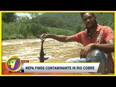 NEPA Finds Contaminants in Rio Cobre   TVJ News - August 3 2021