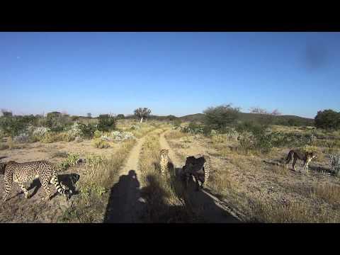 Cheetah Park, Namibia
