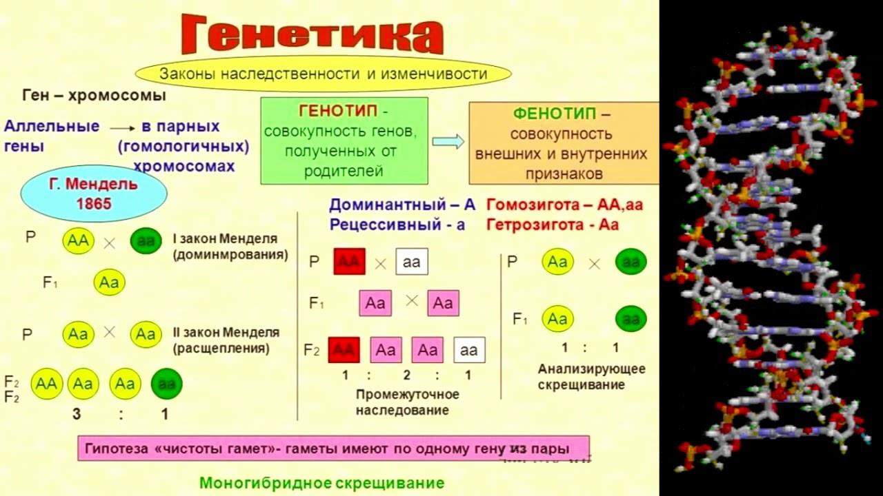 Генетический паспорт (рассказывает генетик Валерий Ильинский)