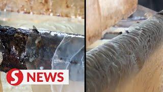 Rat droppings, flies infest 'foo chuk' factory