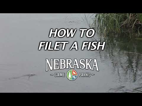 How To Filet A Fish with Daryl Bauer