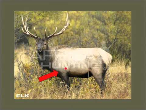 Elk Shot Placement Youtube