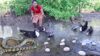 Survival skills: Catch snake & duck Pick duck egg for food - Grilled duck egg in the mud for dinner