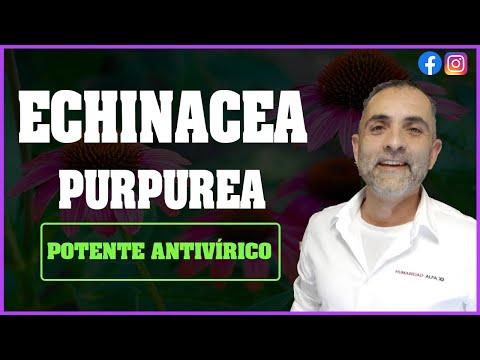 Echinacea Purpúrea. Un potente Antivirico