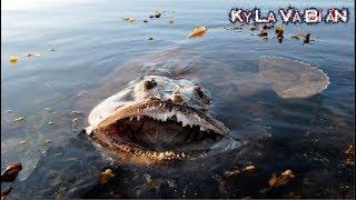 Nếu gặp 10 loài cá kỳ lạ này bạn phải bơi thật nhanh nếu muốn sống
