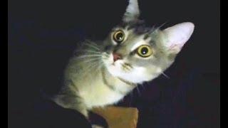 Indoor Cat or Outdoor Cat??