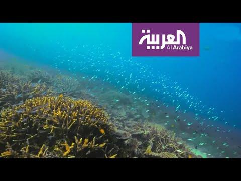 الشعب المرجانية في أستراليا.. تنتظر مفاجأة  - نشر قبل 3 ساعة