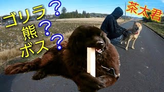 おはようございます☀   今日はゴリラのような、熊のようなボス君と、北...