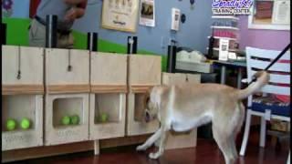 Spratly K9 Scent Detection Dog Training (part 1)