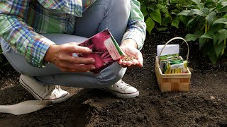 Jakie rośliny możemy wysiać w warzywniku w lipcu