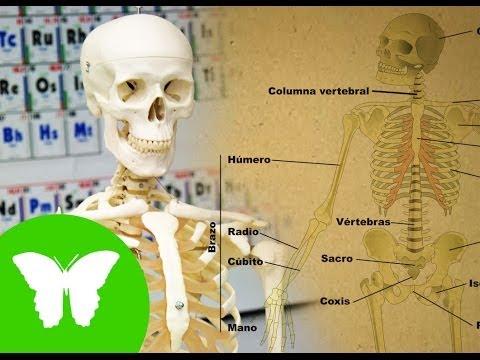 la-eduteca---el-esqueleto