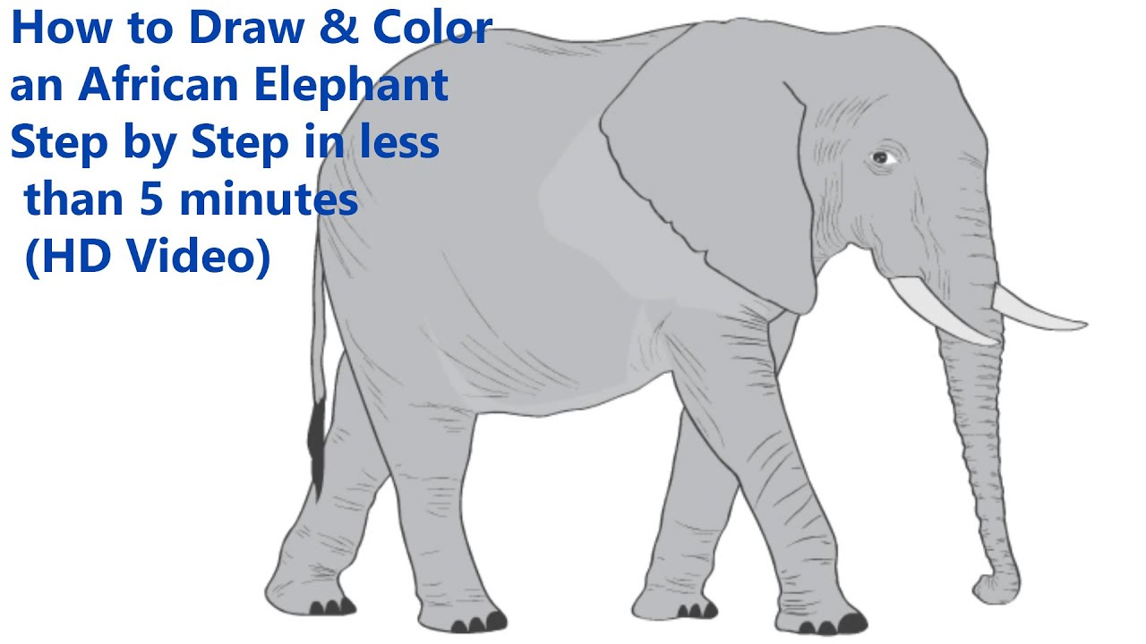 How to Draw & Color an African Elephant Step by Step in less than 5 ...