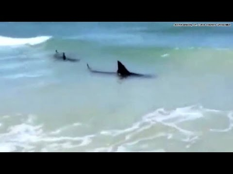 Watch Sharks Spotted At Florida Beach Youtube