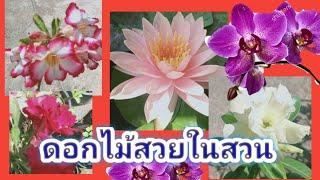#ดอกไม้ในสวน /#ชมดอกไม้ #ดอกไม้สวย