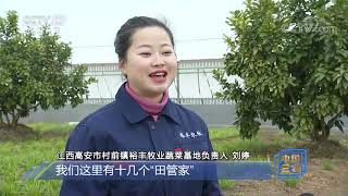 《中国三农报道》 20201226|CCTV农业 - YouTube