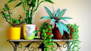 How to grow plant in coffee mugs/Cups || Backyard Gardening