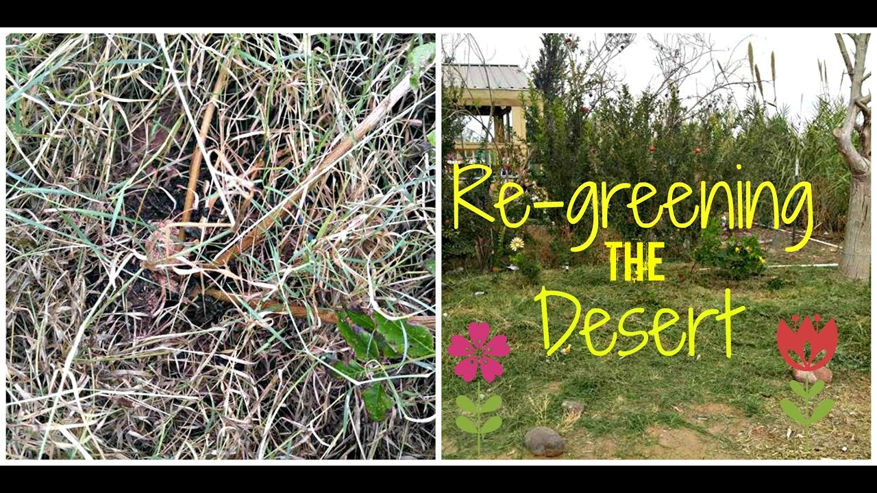 Results sheet mulching in the desert Permaculture Desert