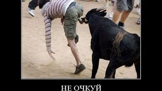 Смешные картинки про животных. Funny  pictures  with animals.
