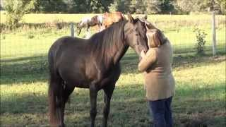 Tennessee Walking Horse Rescue and Rehabilitation