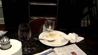 Sweet Pea Eating Pasta