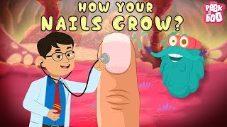 How Your Nails Grow? | The Dr. Binocs Show | Best Learning Videos For Kids | Peekaboo Kidz