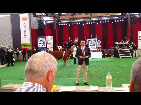 Steer Auction Prize Winning Steers