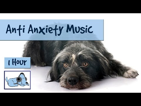 Anti-Anxiety Music for Dogs and Puppies, Music to Soothe Dogs Suffering with Anxiety or Stress