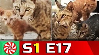 Funny Cat Videos for Kids | S1-EP17 | Don't Disturb || Capture Candy Kids TV