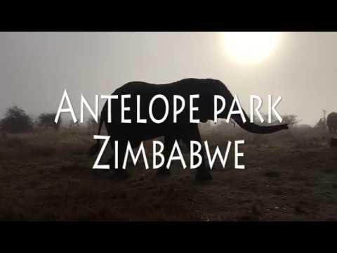 Zimbabwe - Antelope park