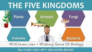 5 Kingdom Classification - GCSE Biology (9-1)