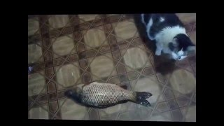 Кормление кошек, уход за кошками, кот и рыба